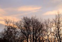 芬兰现出轮廓日落结构树冬天 免版税库存图片