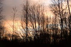 芬兰现出轮廓日落结构树冬天 免版税库存照片