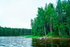 芬兰自然风景:湖Saimaa岸  库存照片