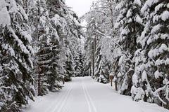 芬兰:冬天在森林里 免版税图库摄影