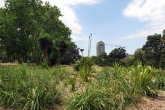 从芬芳庭院的一个看法一个新的摩天大楼的建筑的 免版税库存图片