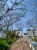 芬芳花和树徒步道路的阴影在Phra洛坤Khiri小山顶  库存图片