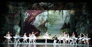 芭蕾湖天鹅 库存照片