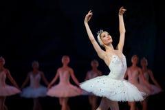 芭蕾舞团首席女演员白色天鹅 图库摄影