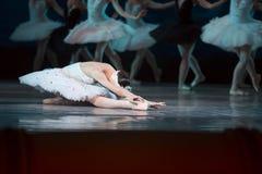 芭蕾舞团首席女演员白色天鹅 免版税图库摄影