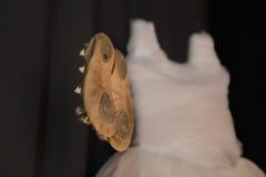 芭蕾pointe鞋子 免版税图库摄影