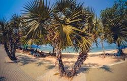 芭达亚海滩路棕榈 免版税库存照片