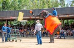 芭达亚,泰国:大象射击篮球展示。 免版税图库摄影