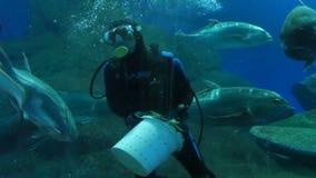 芭达亚,泰国- 2018年1月23日:轻潜水员喂养鲨鱼和其他大鱼在水族馆有透明的 股票视频