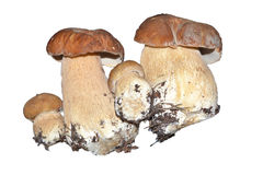 芯片蘑菇 免版税图库摄影