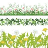 花、无缝的草和的叶子,集合 免版税库存照片