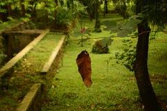 花、枝杈和干叶子 库存照片