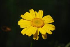 花、植物、树、风景、自然、颜色和幸福 库存照片