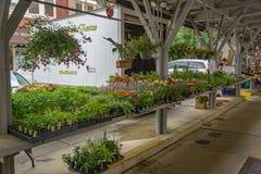 花、植物、菜和工艺待售在罗阿诺克市市场上 免版税库存图片