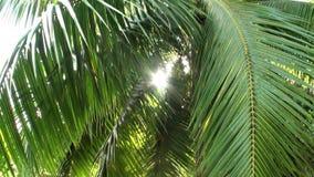 花、植物和树在法属玻里尼西亚塔希提岛的 影视素材