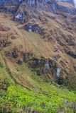 花、草和岩石在安地斯 库存照片