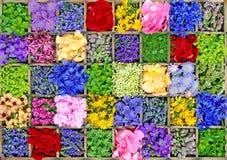 花、草本和香料拼贴画 免版税库存图片