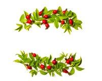 花、莓果和绿色框架在一白色backgrou离开 库存照片
