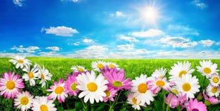 花、绿色草甸和蓝天与太阳 免版税库存照片