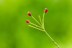 花。 免版税图库摄影