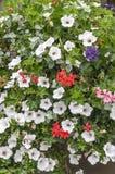 花丛生用不同的颜色 免版税库存照片