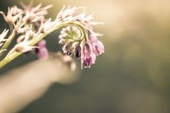 以花为背景的紫色花 免版税库存图片