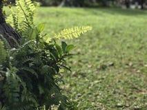 花云彩黄色蓝天早晨 图库摄影