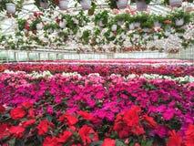 花五颜六色的品种在园艺中心 库存照片