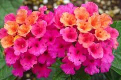 花五颜六色的春天花束在一个几何样式的 免版税库存图片