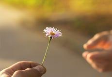 花产生现有量 免版税图库摄影