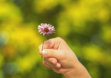 花产生现有量 库存照片