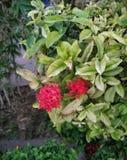 花传播了幸福环球 图库摄影