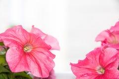 花做彩色塑泥罐红色 免版税库存照片