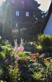 花充分的庭院 库存照片