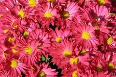花充分的桃红色屏幕 免版税库存照片