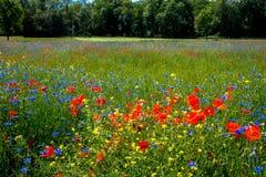 花充分的草甸 库存照片