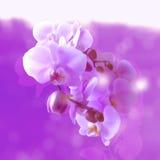 花兰花花束在玻璃反映的 向量例证