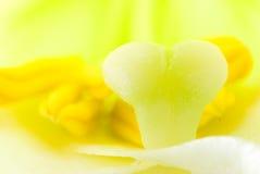 花内部百合雌蕊雄芯花蕊白色 免版税图库摄影