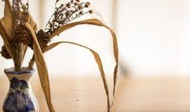 花凋枯了在花瓶的褐色 免版税库存图片