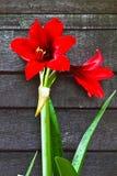 花分区红色墙壁 免版税图库摄影
