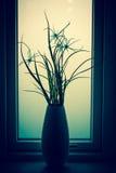 花剪影在卫生间窗口里 免版税库存照片