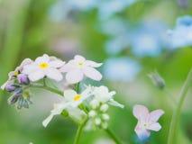 花勿忘草蓝色和桃红色作为爱和和谐联系性的男孩和女孩态度的概念  免版税图库摄影