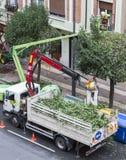 花匠修剪树在洛格罗尼奥,西班牙 免版税图库摄影