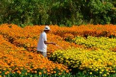 花匠喜欢花在他们的庭院里 免版税库存图片