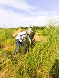 花匠在年轻棕榈树t附近喷洒除草药 免版税库存照片