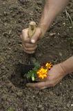 花匠在庭院里种植一朵花 免版税库存图片