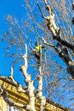 花匠在艾克斯普罗旺斯,法国砍一棵悬铃树 库存照片