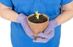 有机耕田概念,春天和种植概念 库存图片