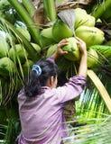 花匠是果皮每椰子 免版税库存图片