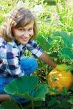 花匠用橙色南瓜在庭院里 库存照片
